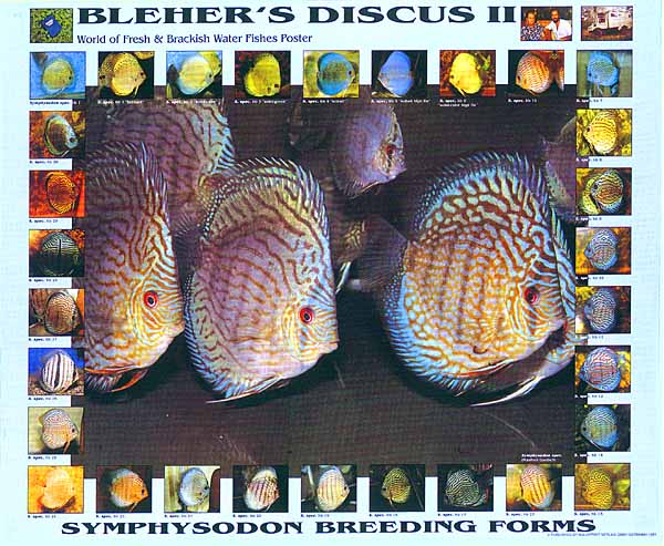 Bleher S Discus Ii Symphysodon Breeding Forms