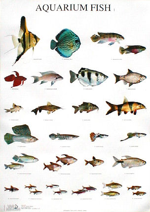 Tropical fish types names tropical fish types with Types of fish aquarium