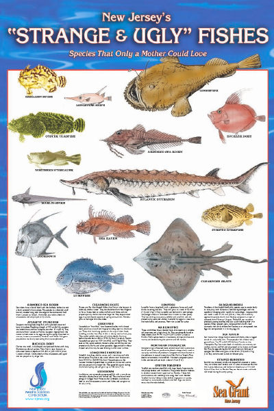 New jersey 39 s strange ugly fishes for Nj fish and game