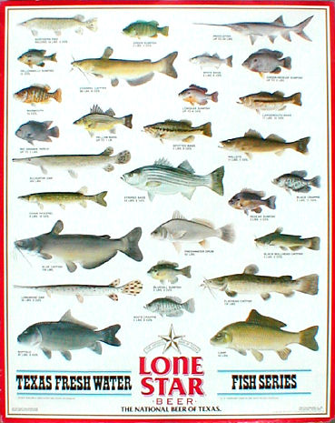 Texas Fish  Game on Fish Of North America 29 Posters Trout Salmon Maynard Reece Schmidts