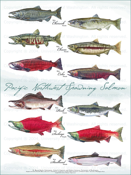 All Photos Courtesy Of Fish Poster Collection